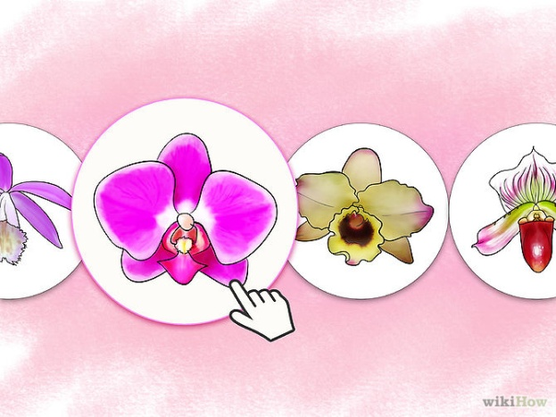 Care for Orchids Step 1 Version 2.jpg