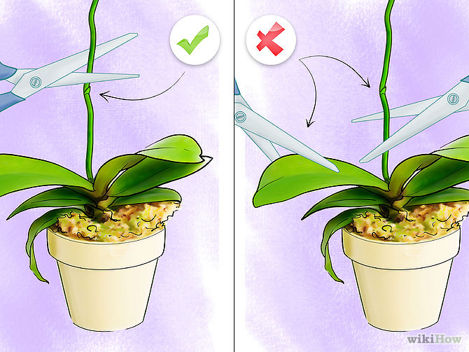 Care for Orchids Step 13.jpg