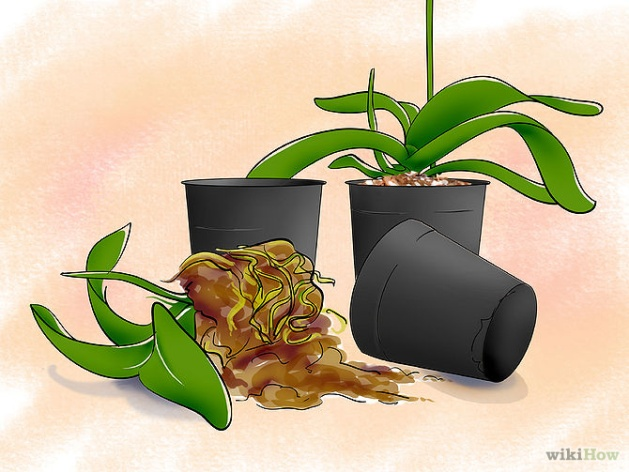 Care for Orchids Step 9.jpg