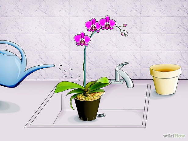 Care for Orchids Step 5.jpg