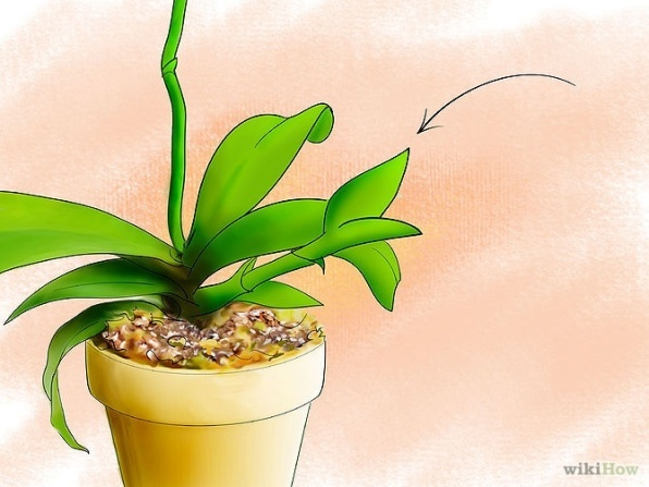 Care for Orchids Step 15.jpg