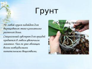 Грунт Не любой грунт подойдет для выращивания этого комнатного растения дома