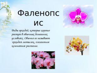 Фаленопсис Виды орхидей, которые хорошо растут в обычных домашних условиях. О