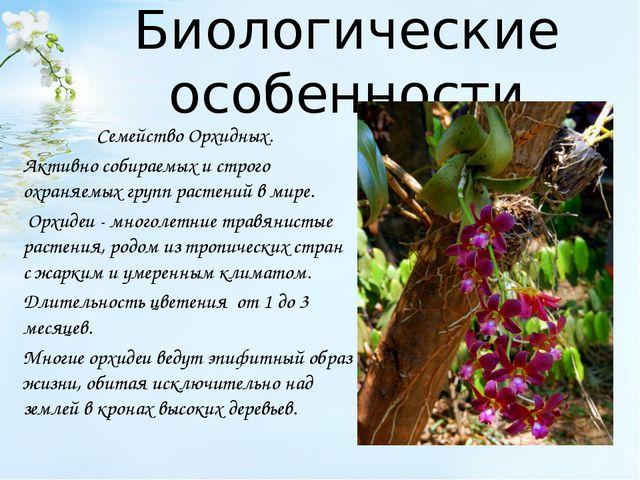 Биологические особенности Семейство Орхидных. Активно собираемых и строго охр...