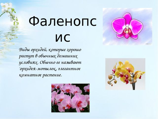 Фаленопсис Виды орхидей, которые хорошо растут в обычных домашних условиях. О...