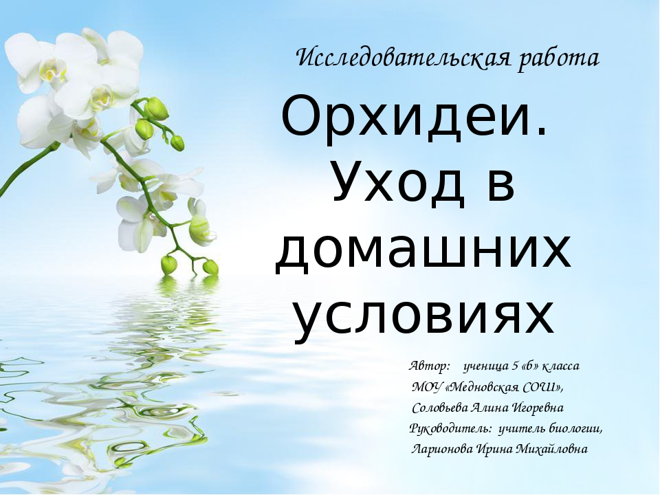 Орхидеи. Уход в домашних условиях Автор: ученица 5 «б» класса МОУ «Медновская...