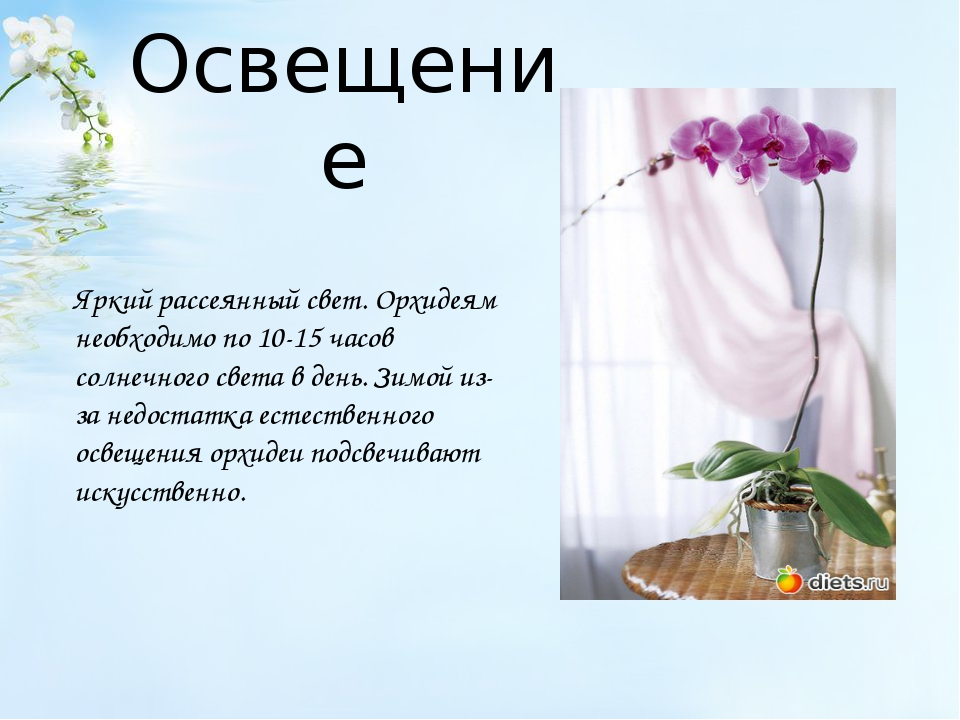 Освещение Яркий рассеянный свет. Орхидеям необходимо по 10-15 часов солнечног...