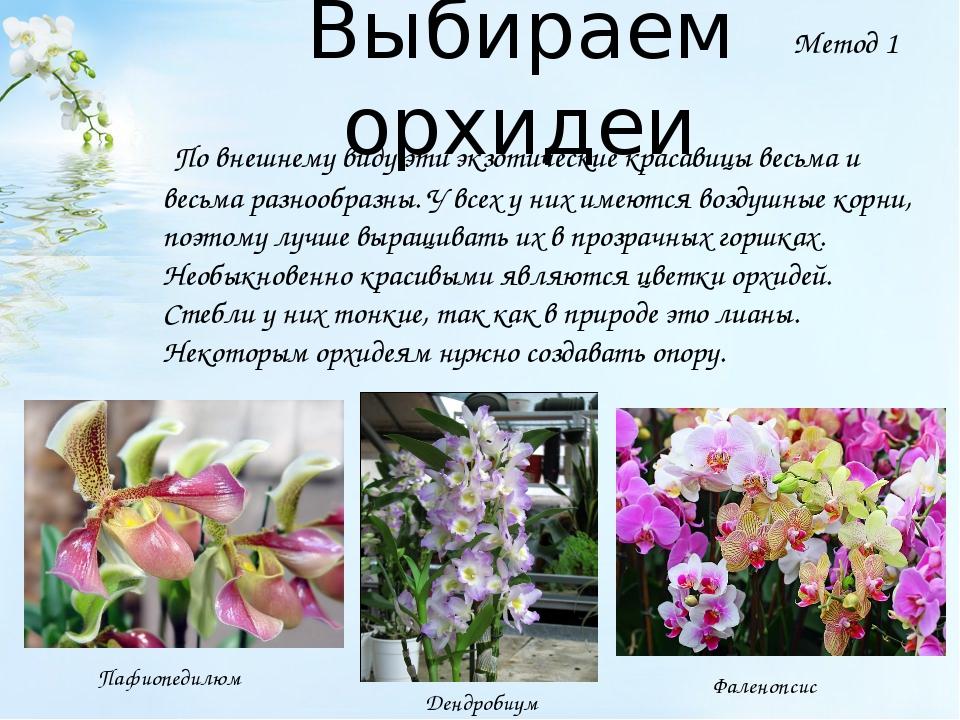 Выбираем орхидеи По внешнему виду эти экзотические красавицы весьма и весьма...