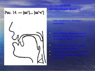 Уклад органов артикуляции звука Щ Губы выдвинуты вперёд и округлены; язык в