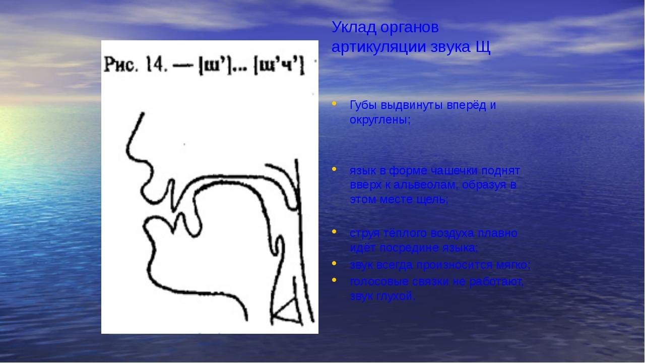 Уклад органов артикуляции звука Щ Губы выдвинуты вперёд и округлены; язык в...