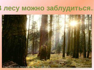 В лесу можно заблудиться…