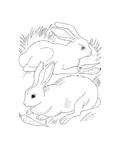 C:\Users\Пользователь\Desktop\кроссворд\bunny-eating-carrot-cartoon-33.jpg