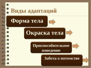 Виды адаптаций