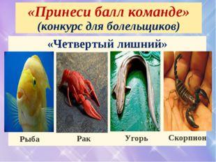 «Принеси балл команде» (конкурс для болельщиков) «Четвертый лишний» Рыба Рак