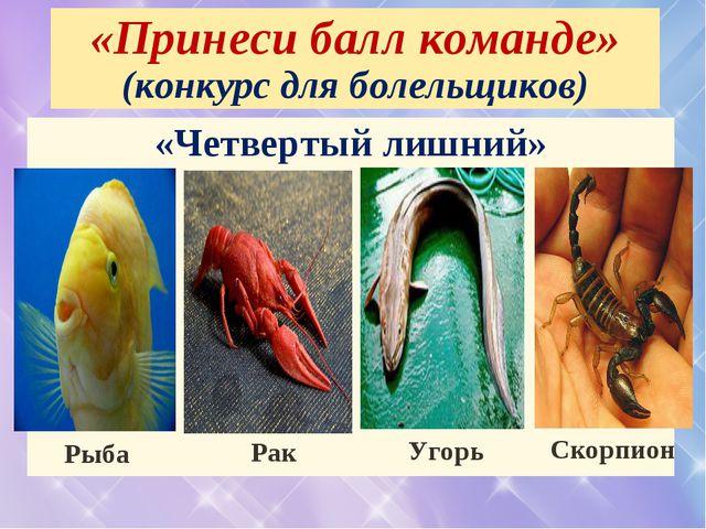 «Принеси балл команде» (конкурс для болельщиков) «Четвертый лишний» Рыба Рак...