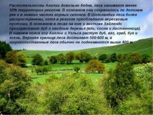 Растительность Англии довольно бедна, леса занимают менее 10% территории реги