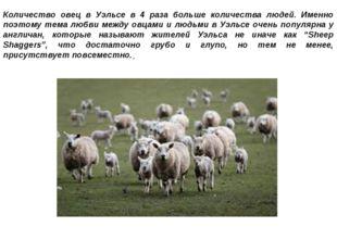 Количество овец в Уэльсе в 4 раза больше количества людей. Именно поэтому тем