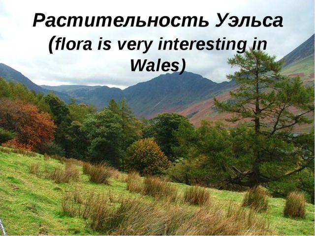 Растительность Уэльса (flora is very interesting in Wales)