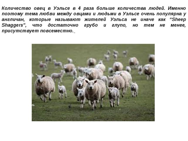 Количество овец в Уэльсе в 4 раза больше количества людей. Именно поэтому тем...