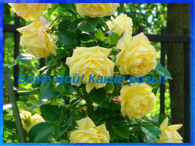 Боже мой! Какие розы!