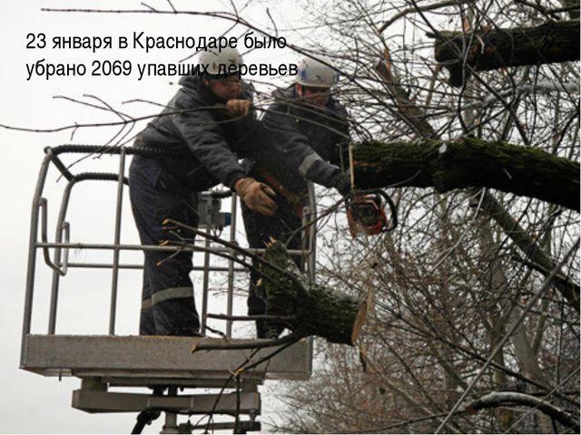 23 января в Краснодаре было убрано 2069 упавших деревьев