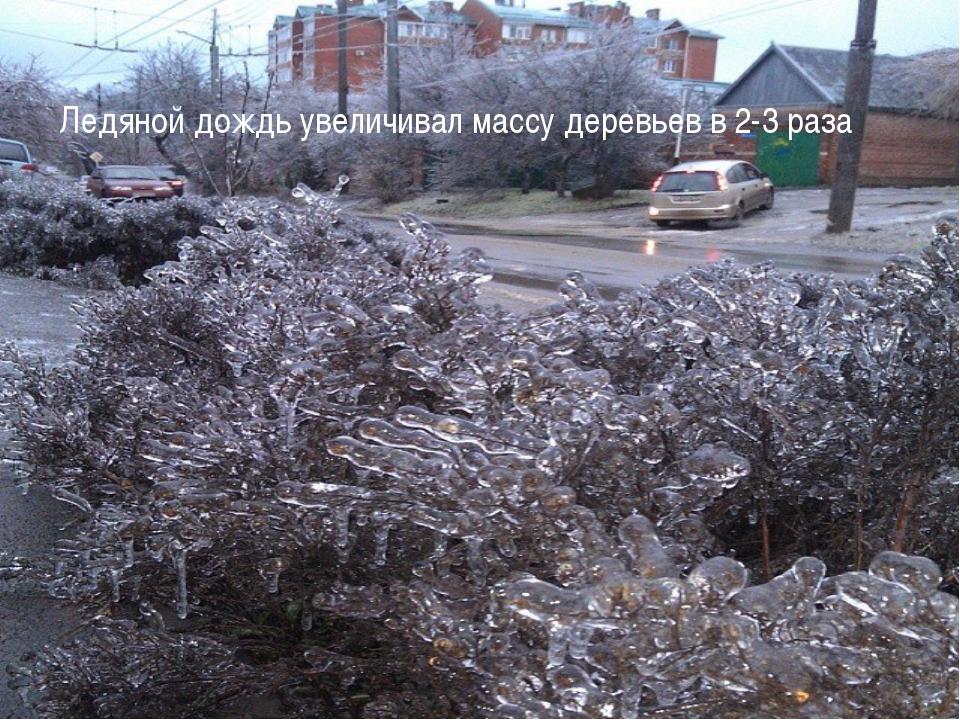 Ледяной дождь увеличивал массу деревьев в 2-3 раза