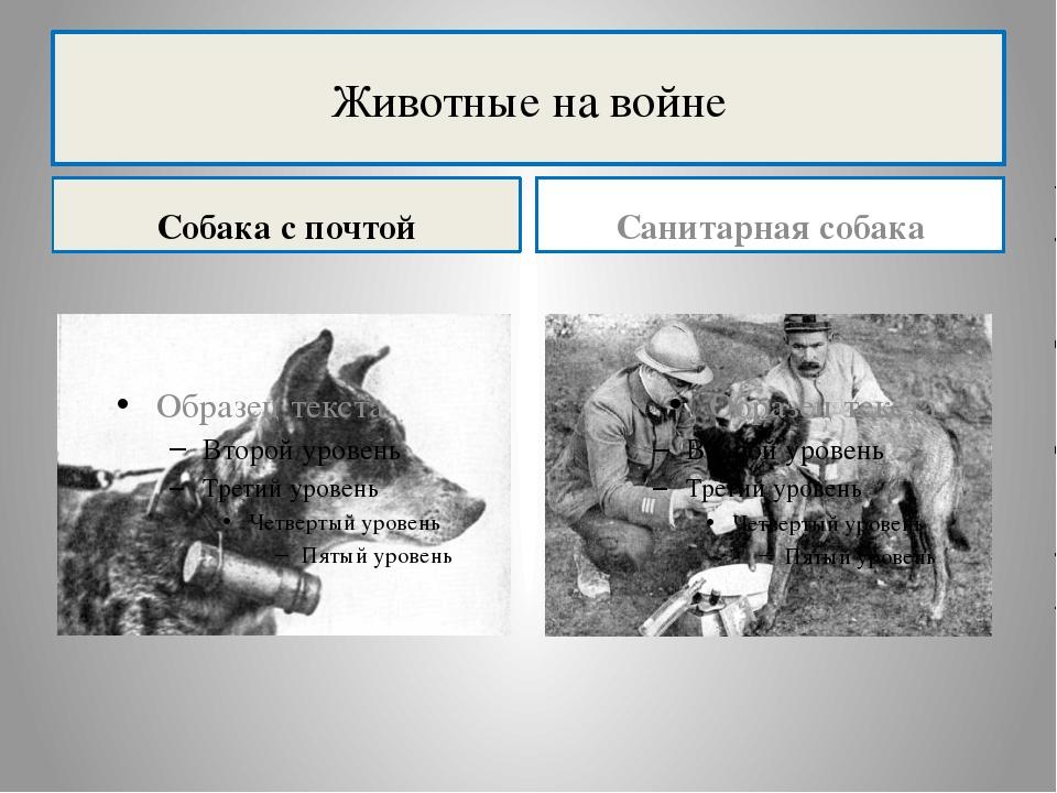 Животные на войне Собака с почтой Санитарная собака