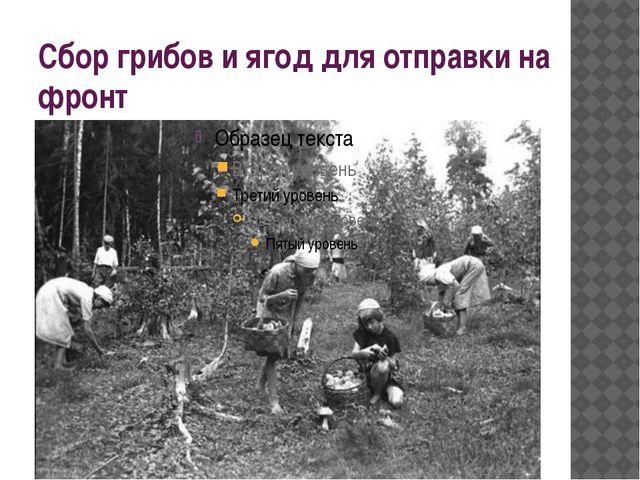 Сбор грибов и ягод для отправки на фронт