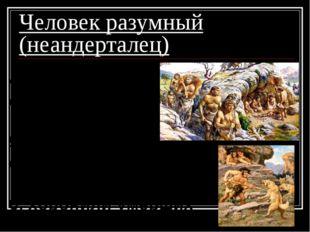 Человек разумный (неандерталец) 4. коллективная охота; 5. заботились о старик