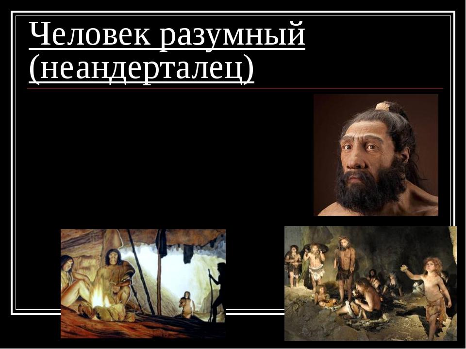Человек разумный (неандерталец) 1. жили в пещерах; 2. шили одежду; 3. добывал...