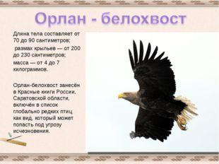Длина тела составляет от 70 до 90 сантиметров; размах крыльев— от 200 до 230