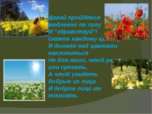 """Давай пройдёмся медленно по лугу И """"здравствуй""""! скажем каждому цветку. Я"""