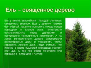 Ель – священное дерево Ель у многих европейских народов считалось священным д