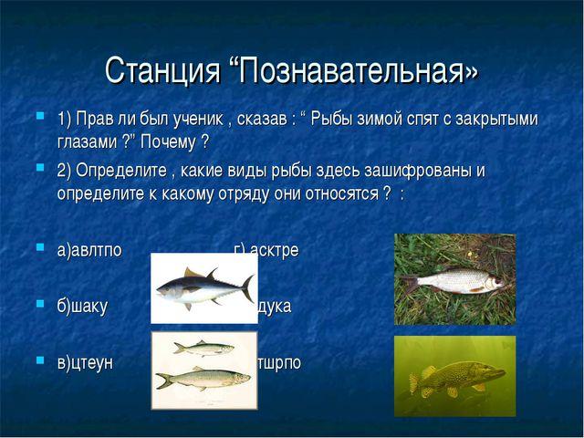 """Станция """"Познавательная» 1) Прав ли был ученик , сказав : """" Рыбы зимой спят с..."""