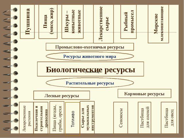 Биологические ресурсы Лесные ресурсы Кормовые ресурсы Растительные ресурсы Ре...