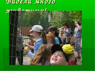 Видели много животных!
