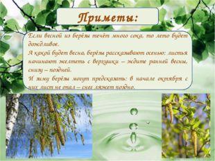 Приметы: Если весной из берёзы течёт много сока, то лето будет дождливое. А к