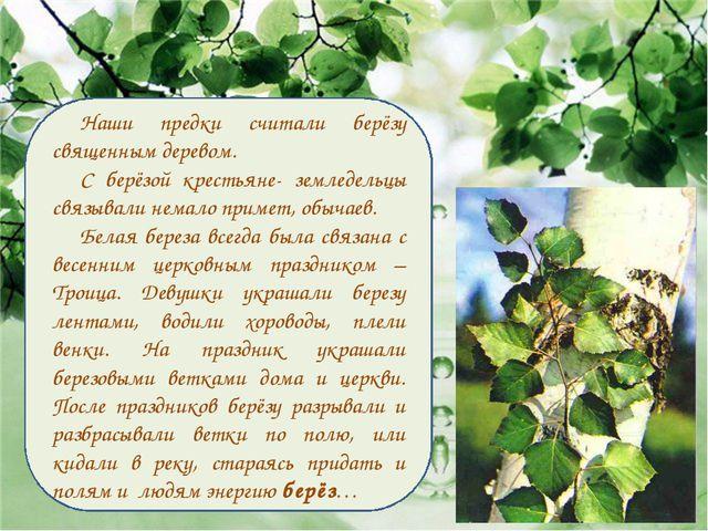 Наши предки считали берёзу священным деревом. С берёзой крестьяне- земледельц...