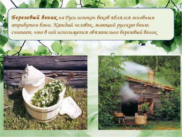 Березовый веникна Руси испокон веков являлся основным атрибутом бани. Каждый...