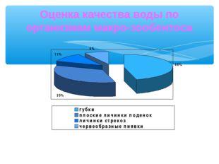 Оценка качества воды по организмам макро-зообентоса