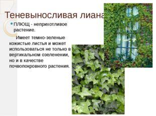 Теневыносливая лиана ПЛЮЩ - неприхотливое растение. Имеет темно-зеленые кожис