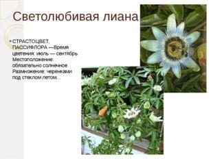 Светолюбивая лиана СТРАСТОЦВЕТ, ПАССИФЛОРА —Время цветения: июль — сентябрь М