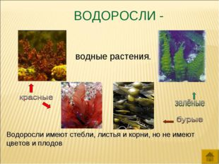 ВОДОРОСЛИ - водные растения. Водоросли имеют стебли, листья и корни, но не им