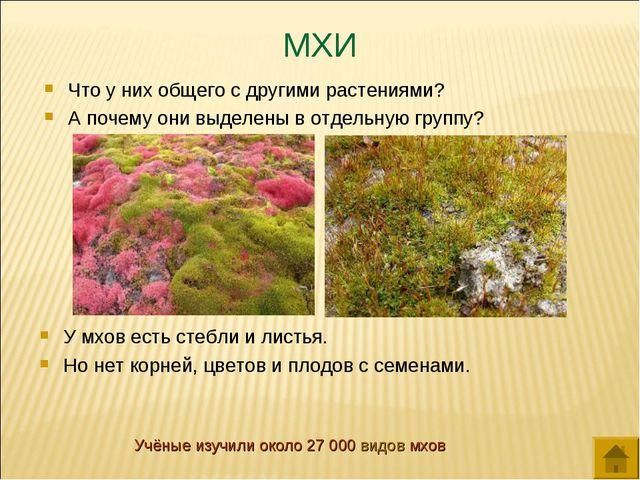 МХИ Что у них общего с другими растениями? А почему они выделены в отдельную...