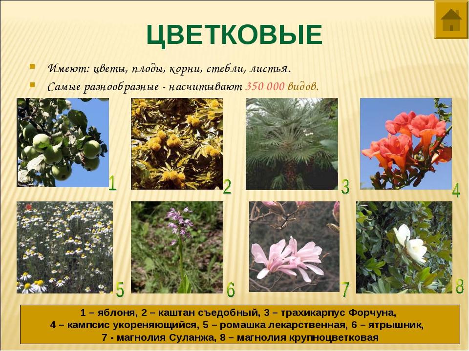 ЦВЕТКОВЫЕ Имеют: цветы, плоды, корни, стебли, листья. Самые разнообразные - н...