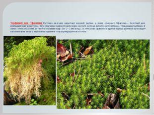 Торфяной мох (сфагнум) Растения ежегодно нарастают верхней частью, а снизу от