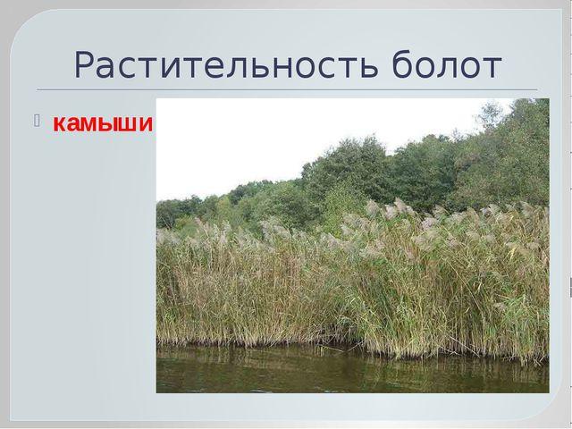 Растительность болот камыши