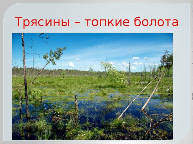 Трясины – топкие болота