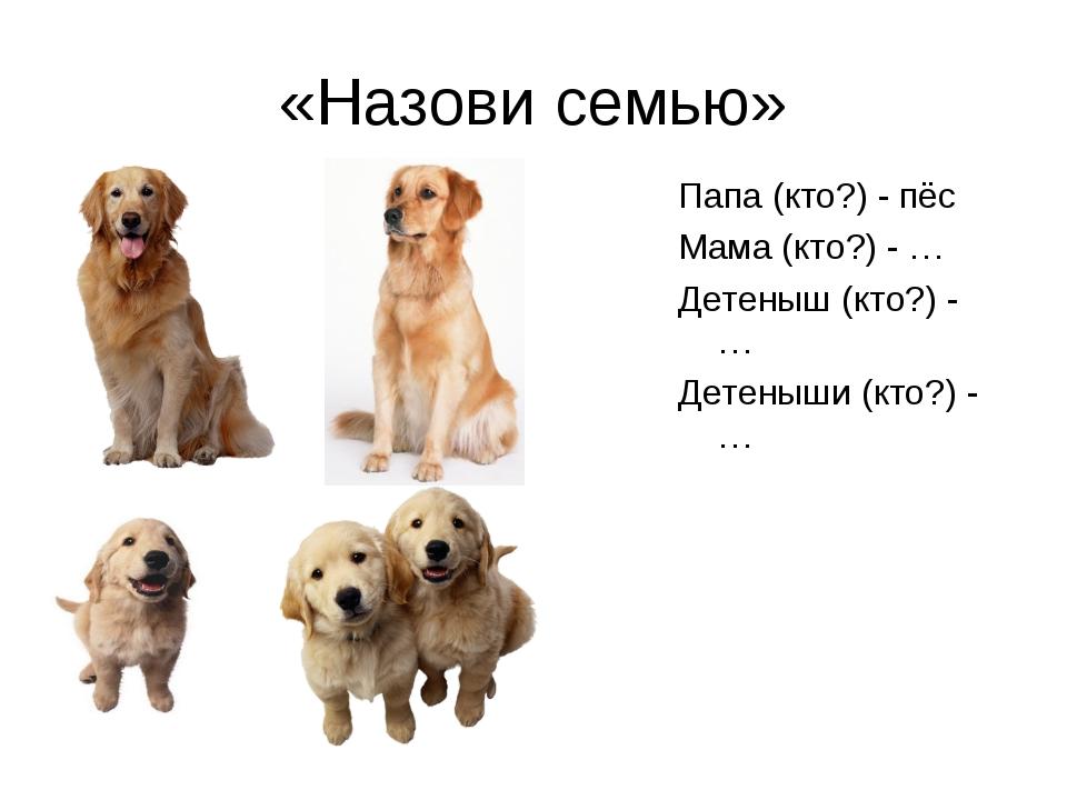 «Назови семью» Папа (кто?) - пёс Мама (кто?) - … Детеныш (кто?) - … Детеныши...