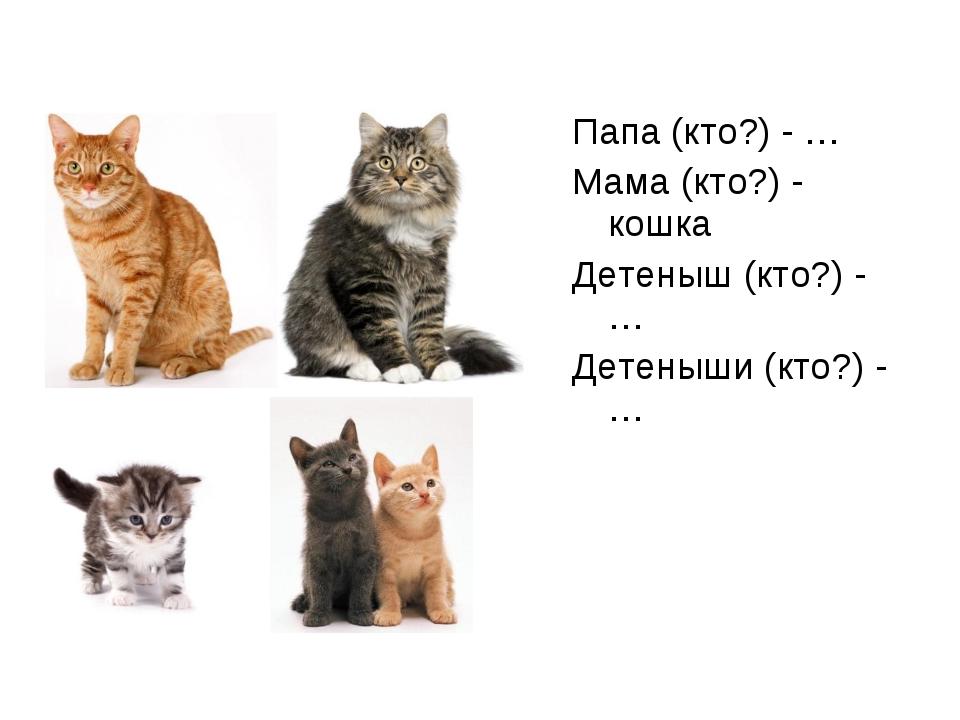 Папа (кто?) - … Мама (кто?) - кошка Детеныш (кто?) - … Детеныши (кто?) - …
